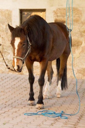 sediertes-Pferd